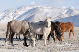 Kyrgyzstan_140211_171455-2.jpg