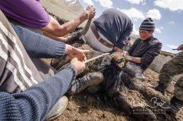 Kyrgyzstan_150504_101210-5.jpg