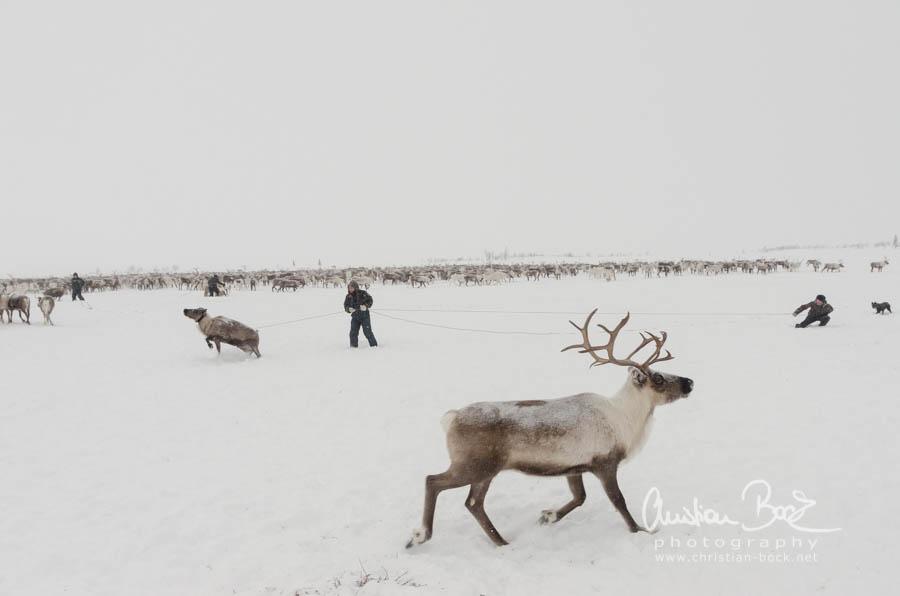 Nenets_160121_103648-2.jpg