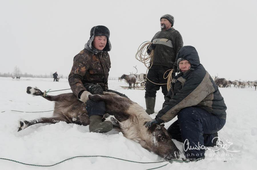 Nenets_160121_112904-2.jpg