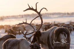 Nenets_160126_122221-5.jpg