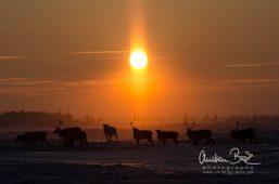 Nenets_160126_132407-3.jpg