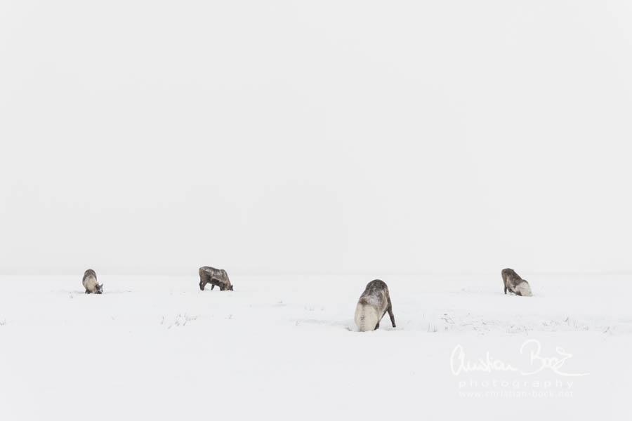 Nenets_160202_131724-4.jpg