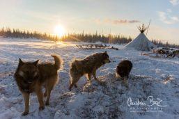 Nenets_160206_134843-3.jpg
