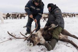 Nenets_160212_112729-2.jpg