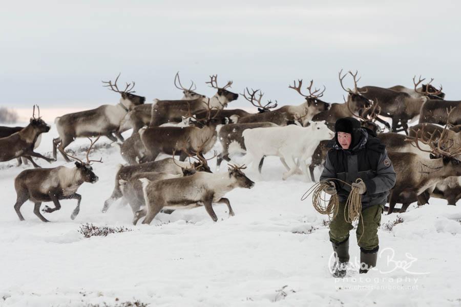Nenets_160212_115326-3.jpg