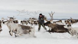Nenets_160212_115352-4-3.jpg