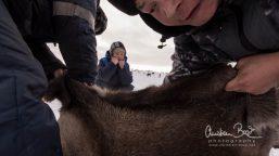 Nenets_160212_130339-3.jpg