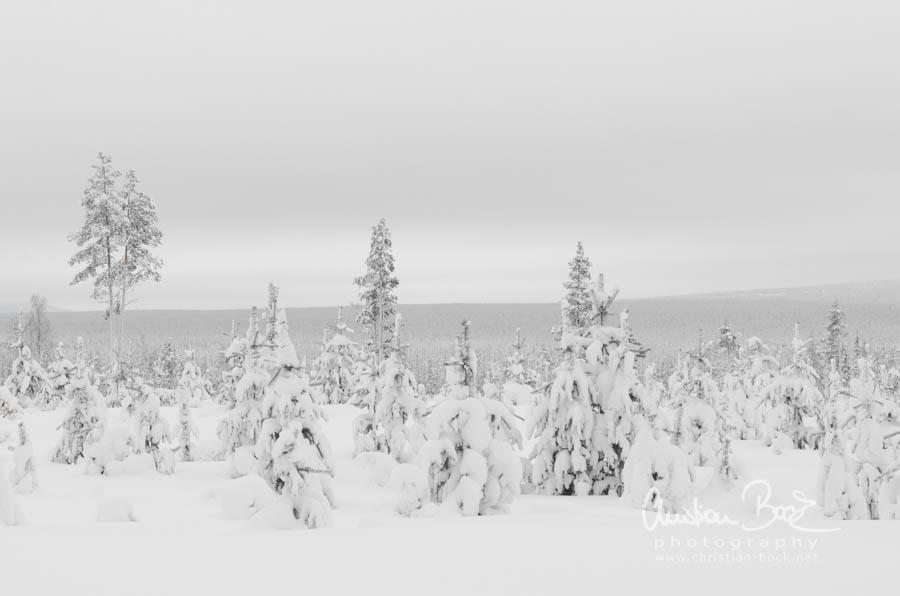 Scandinavia_130205_120548-1.jpg