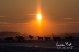 Nenets_160126_132407.jpg