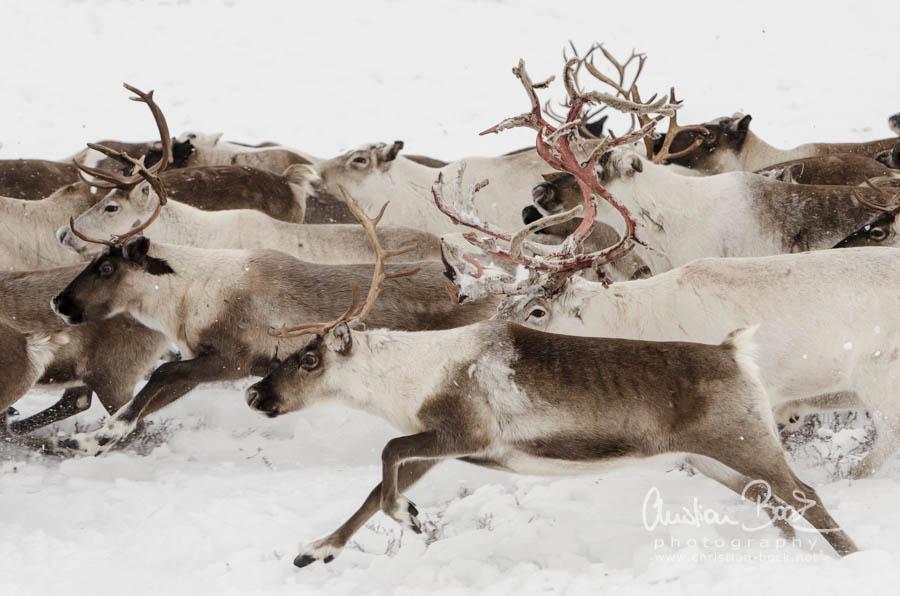 Nenets_160212_113951.jpg