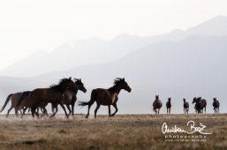 Kyrgyzstan_130727_185025-6.jpg