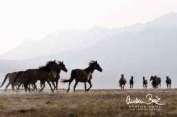 Kyrgyzstan_130727_185025.jpg