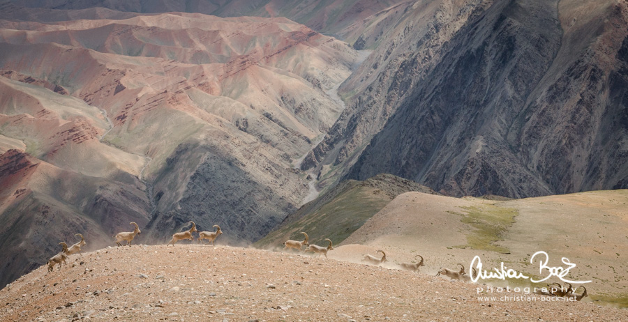 Kyrgyzstan_140809_111004.jpg