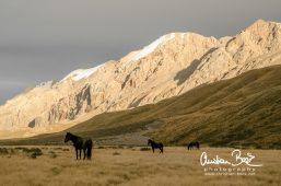 Kyrgyzstan_140828_185013-3.jpg