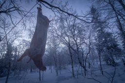 Nenets_160126_150054-1.jpg