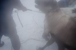 Nenets_160205_100158-2.jpg